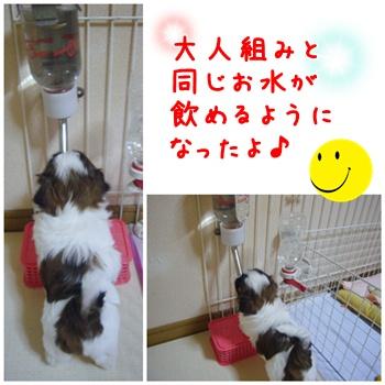090701_Juju_02.jpg