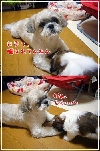 090708_Ju_01.jpg