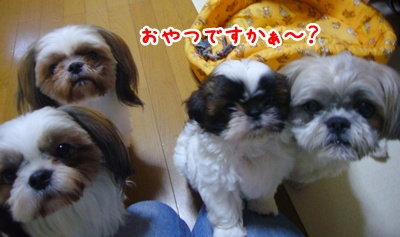 090718_shachan_01.jpg