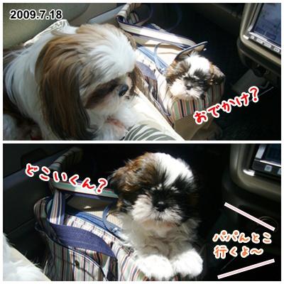 090718_shachan_02.jpg