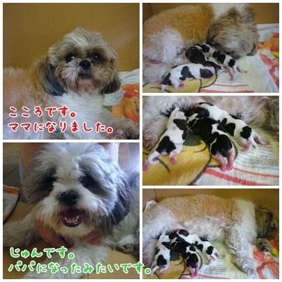 090719_cocoro_02.jpg