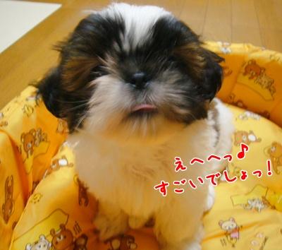 090723_Ju_01.jpg