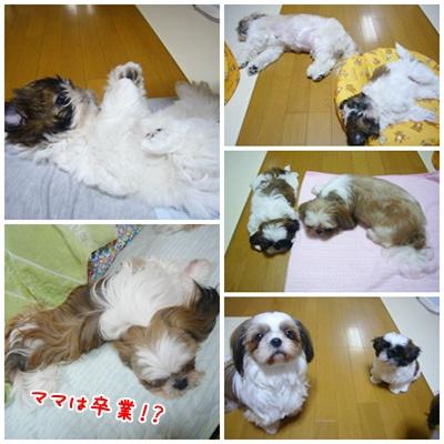 090801_Ju_03.jpg