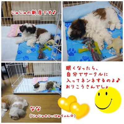 090801_Ju_05.jpg