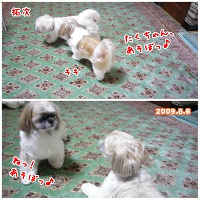090809_Kiki_home_01.jpg