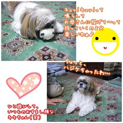 090809_Kiki_home_02.jpg