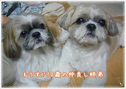 090809_Kiki_home_03.jpg