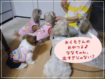 090818_kiki_lion_01.jpg