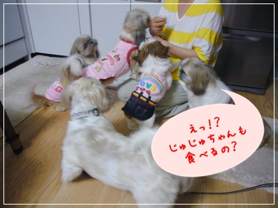 090818_kiki_lion_02.jpg