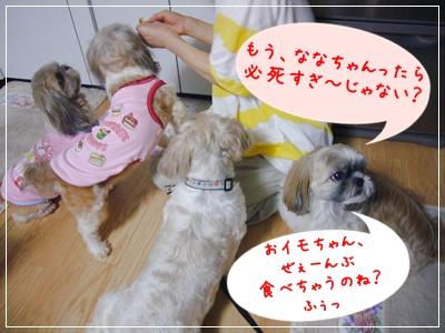 090818_kiki_lion_03.jpg