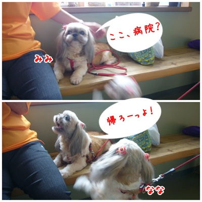 090823_mimifami_02.jpg