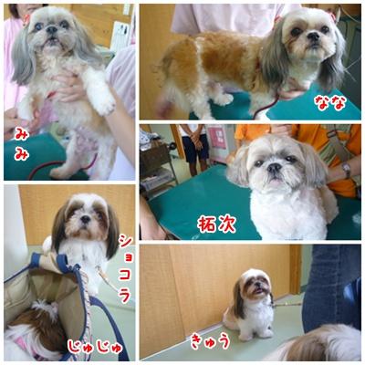 090823_mimifami_04.jpg
