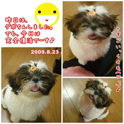 090823_mimifami_05.jpg