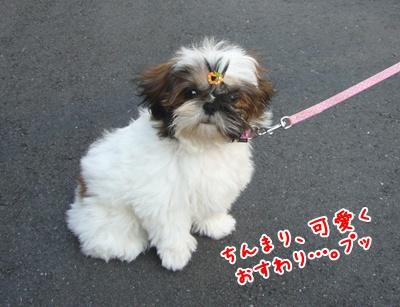 090910_juju_walk_02.jpg