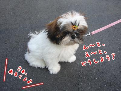 090910_juju_walk_03.jpg
