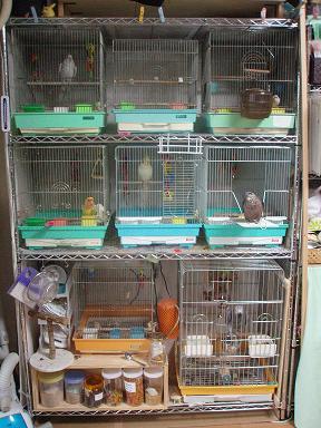 鳥マンション1