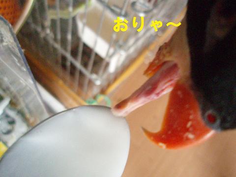 20090720ぴんな2