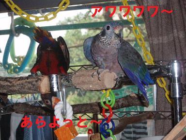 20090725_Duskys2
