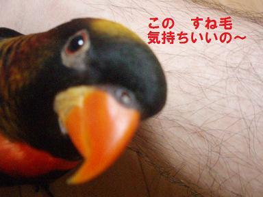 20090729ぴんな1