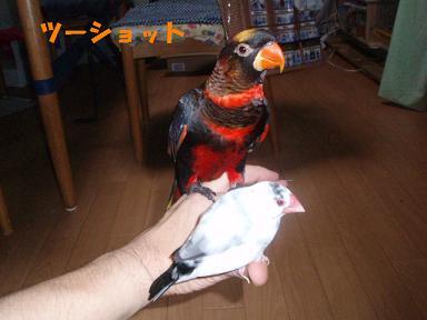 20090729ぴんな4