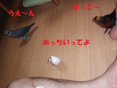 20090729ぴんな6