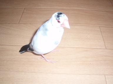 20090729ぴんな8
