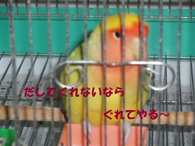 20090816リコ