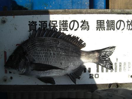 黒鯛1-4