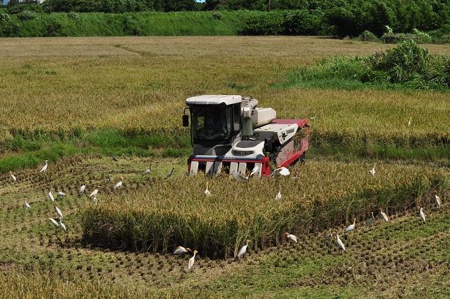 収穫(7)