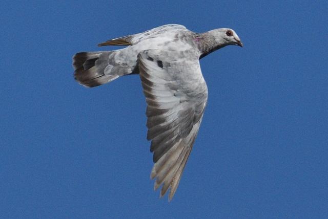 その他野鳥(4)