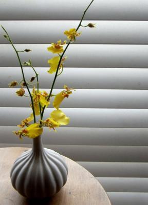 黄色の蘭 2009.9.3