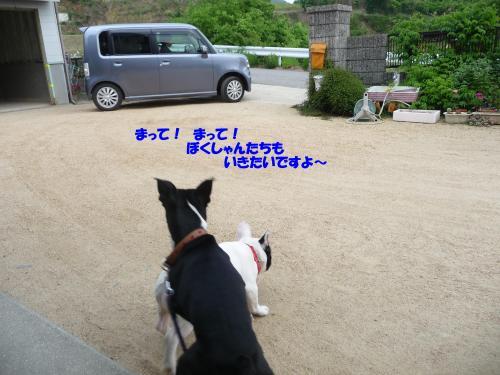 P1010513_convert_20090512214510.jpg