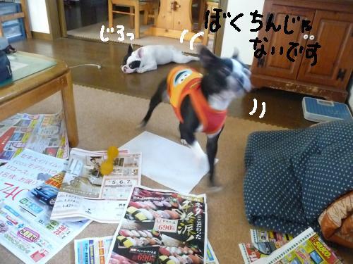 P1030599_convert_20090906004844.jpg