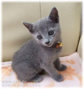 超かわいい♪ 癒される猫の画像特集