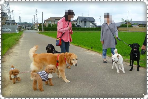 2011,6,13お散歩6