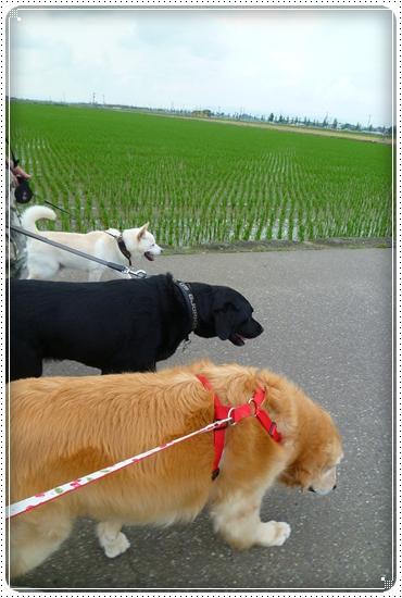 2011,6,13お散歩4
