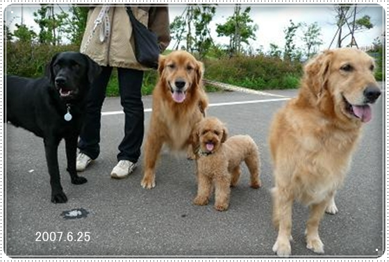 2011,6,13お散歩12
