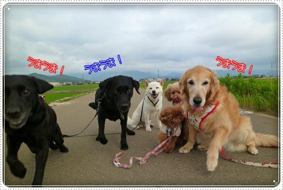 2011,6,13お散歩10