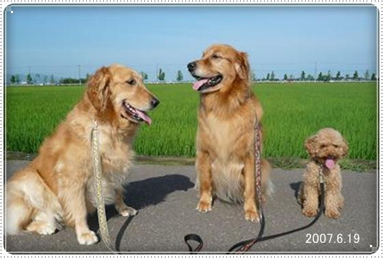 2011,6,13お散歩11