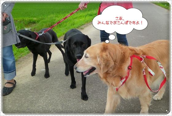 2011,6,13お散歩8