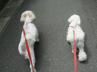 お散歩GO