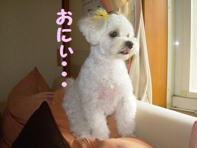 蟆冗伐螳カ蜀咏悄鬢ィ+722_convert_20090724230038
