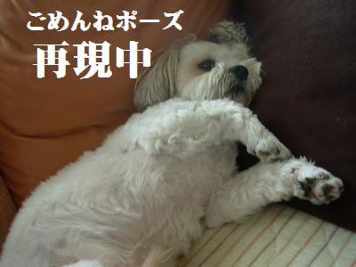 蟆冗伐螳カ蜀咏悄鬢ィ+1100_convert_20090910132923