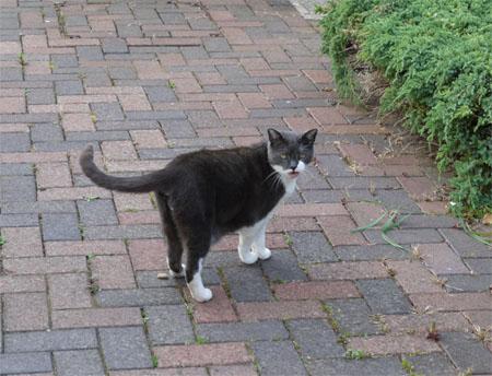 ウィンチカムの猫