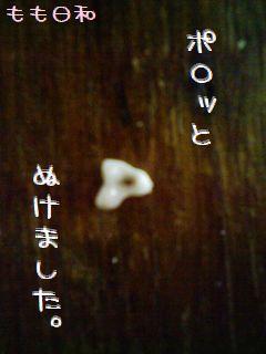 momobiyori