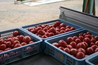 トマト6.9