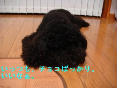 kata7.jpg
