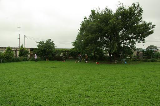 110731-20hirukawa view