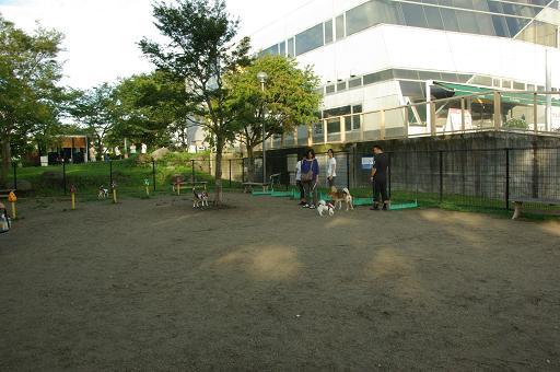 110806-02dog run