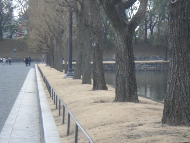 皇居散歩 066